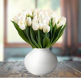 30 Białych Tulipanów