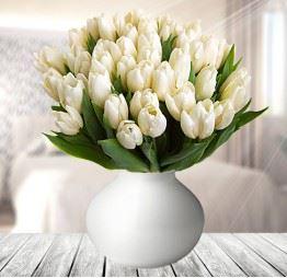 50 Białych Tulipanów