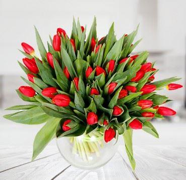 50 Czerwonych Tulipanów