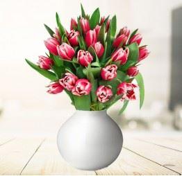 25 Różowych Tulipanów